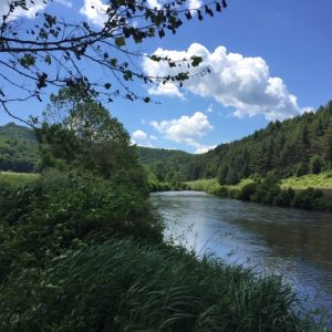 Summer on the New River in Ashe County NC